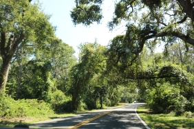 Beautiful Jacksonville Roads