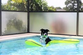 Meet Max in his favourite floatie